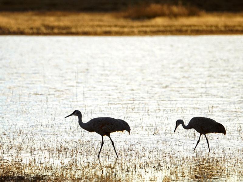 Crane Exercise - Wading Cranes